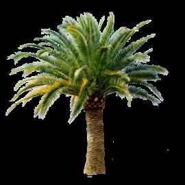 palm-07